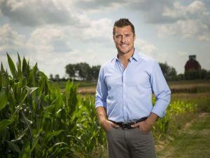 Chris Soules cornfield